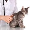 Ветеринарные клиники в Астрахани